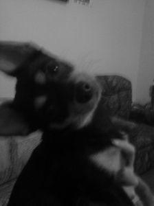 Diego posing